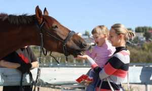 Иппотерапия или лечение лошадьми детей — инвалидов с ДЦП и аутизмом